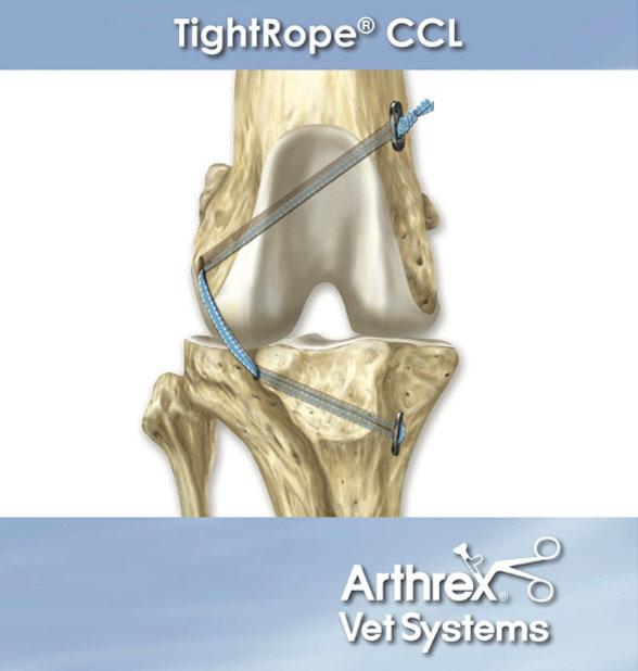 TightRope® - eine minimalinvasive Technik zur Behandlung des Kreuzbandrisses beim Hund